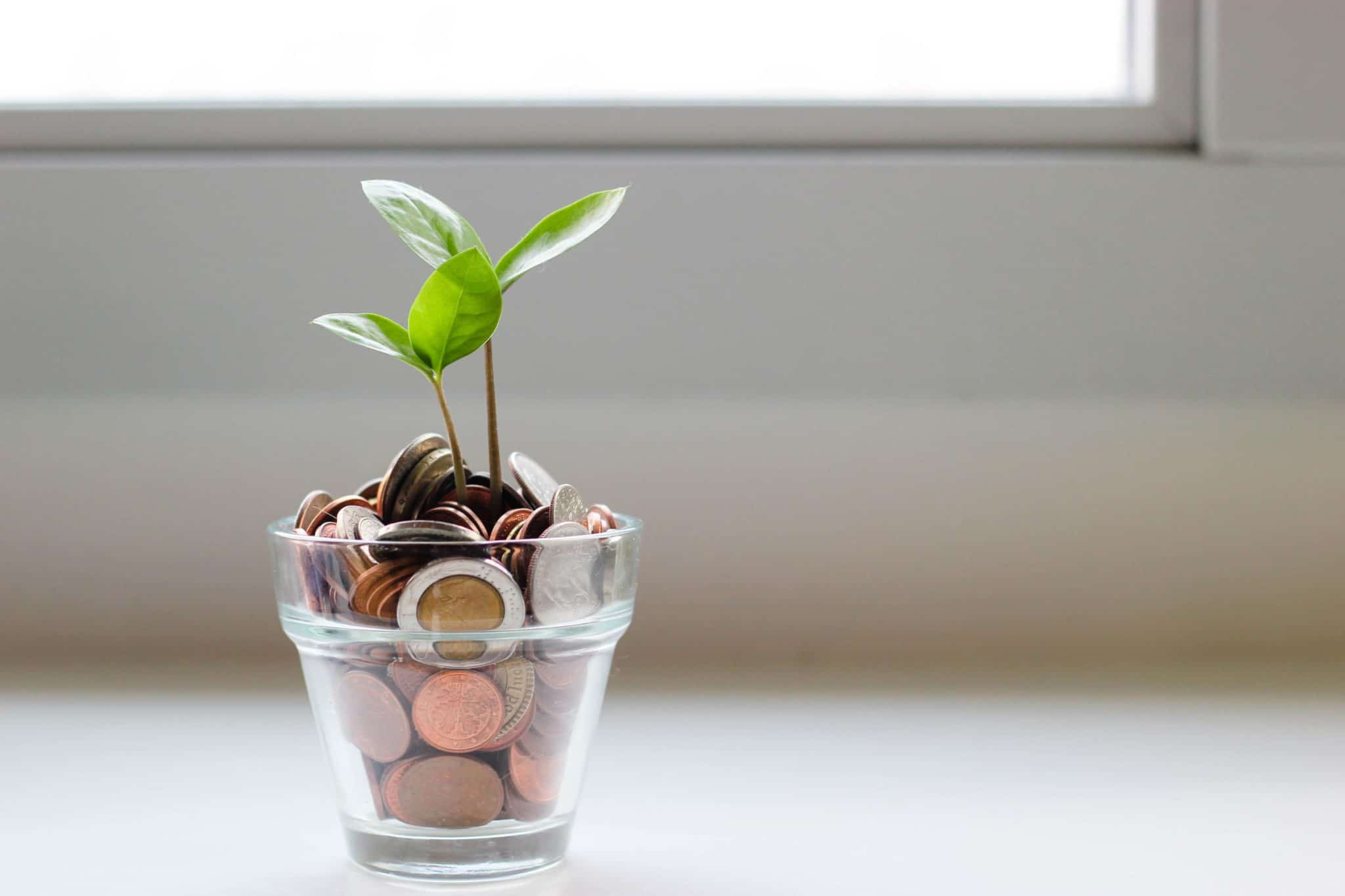 How To Grow From Government Grant - Plant Growing From Coins